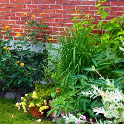 image d'un jardin fleuri
