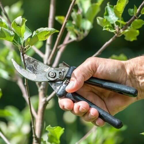 coupe d'une branche