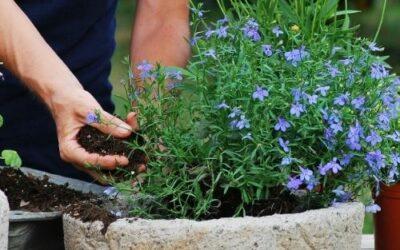Avant de partir en vacances, pensez à l'entretien de jardin à Nancy !